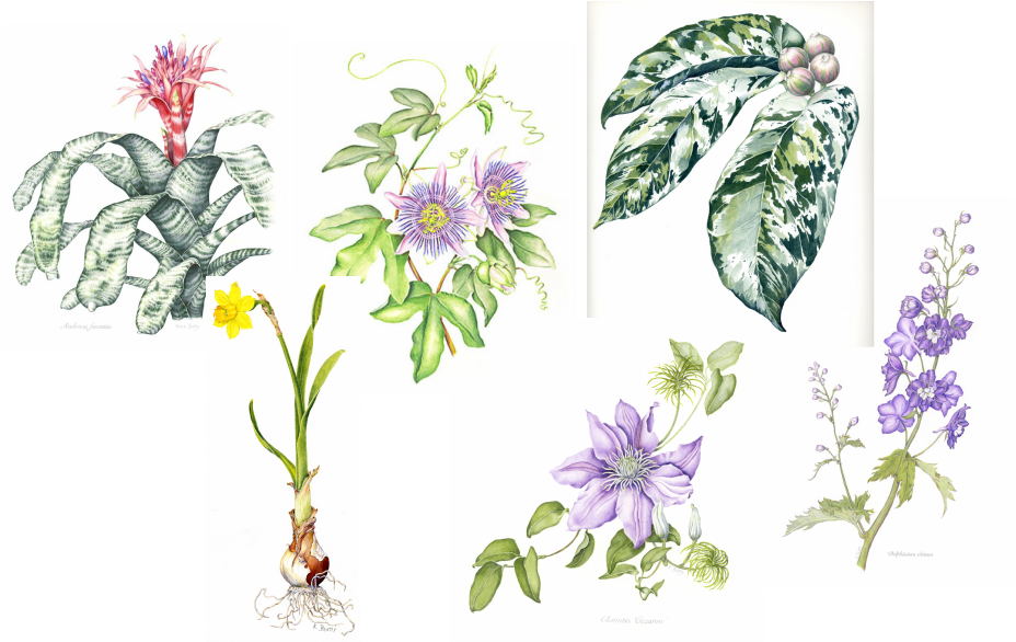 Watercolor botanical illustrations of various flowers and plants.