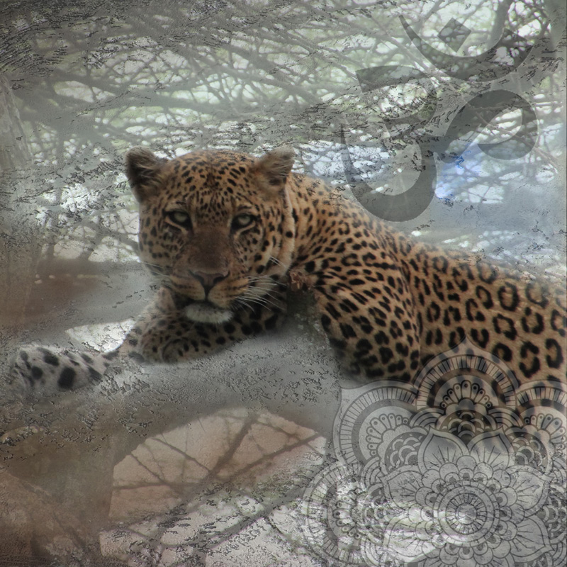 Photography art with a leopard resting on a tree branch, with sanskrit Ohm and an Indian mandala.