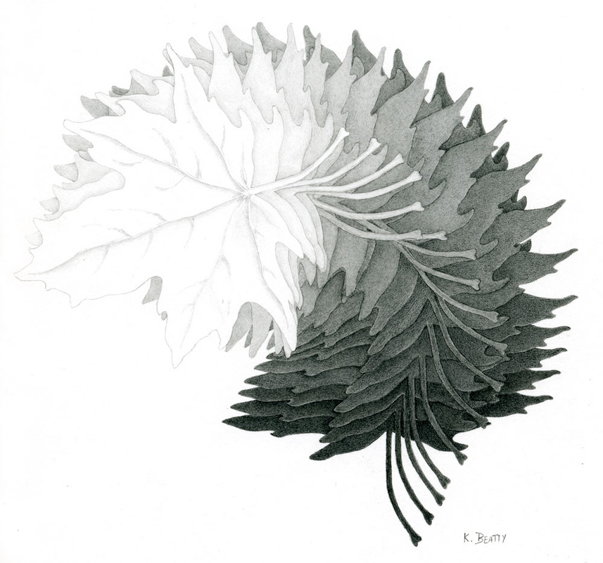 Graphite pencil drawing of maple leaves fanned out to show a range of values from lights to darks.