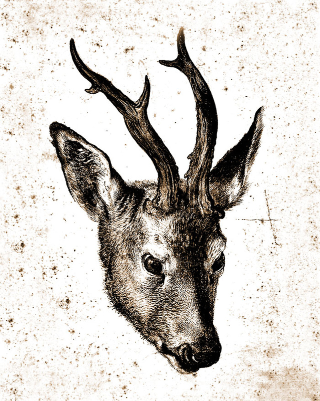 This is a digital artwork based on an antique engraving by Albrecht Durer called Head of a Stag. It has been digitized to look like a line drawing.